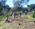 Whiting Ranch Wilderness Park Trail Work | Habitat Restoration